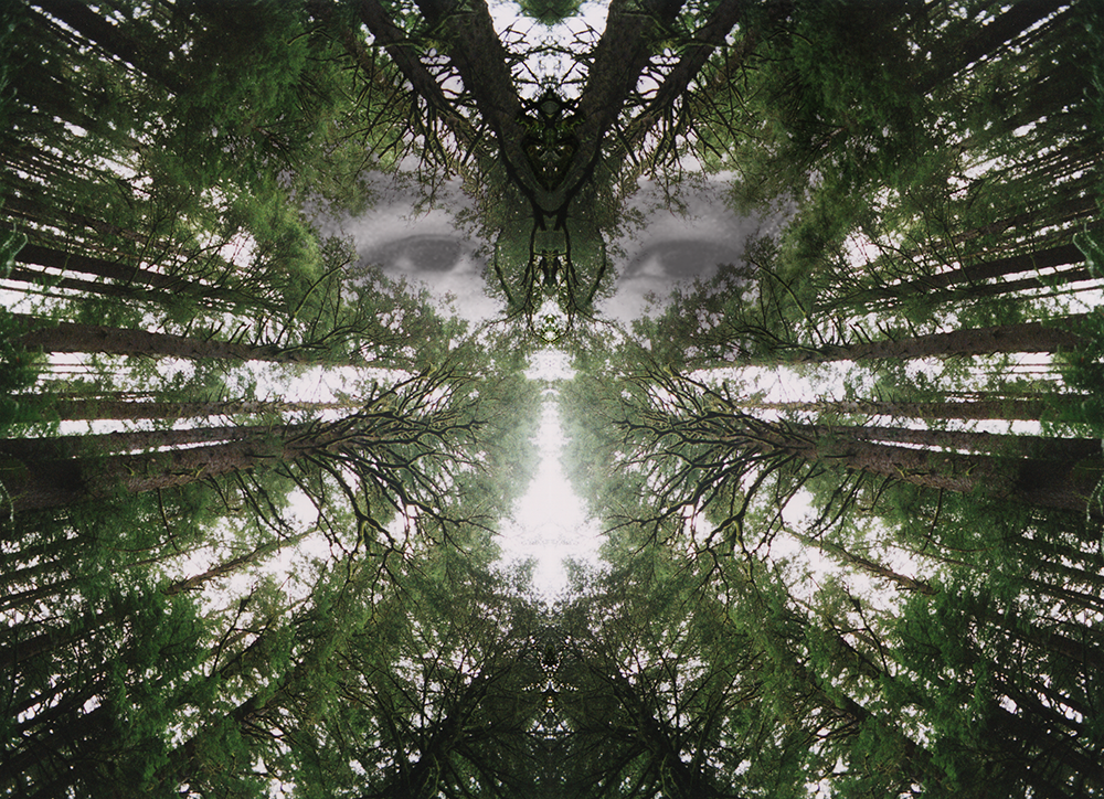 Digitally manipulated photo of a forest canopy with eyes in the center