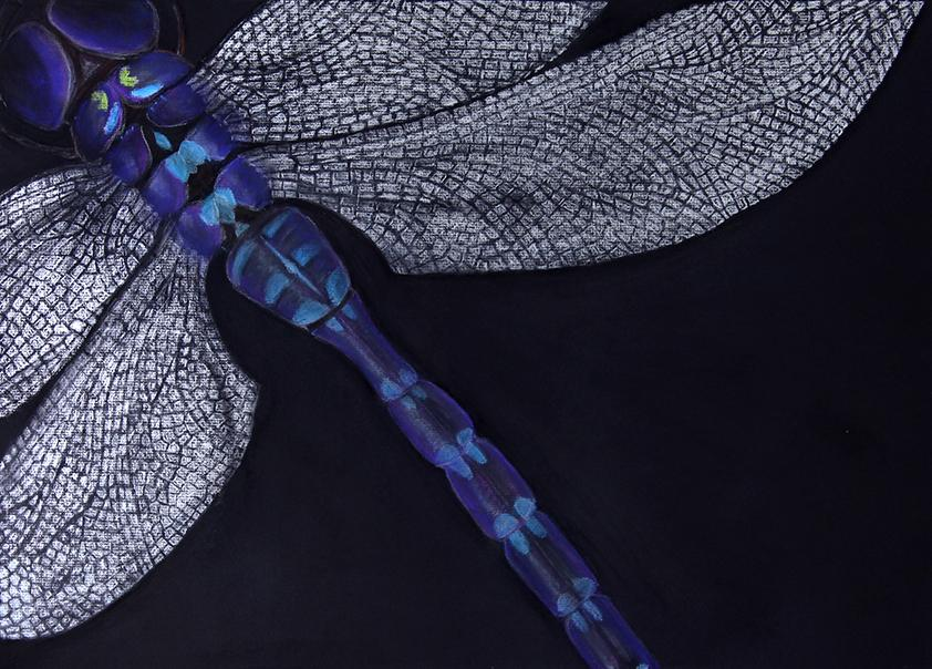 Close up of the back of a dragonfly on a black background