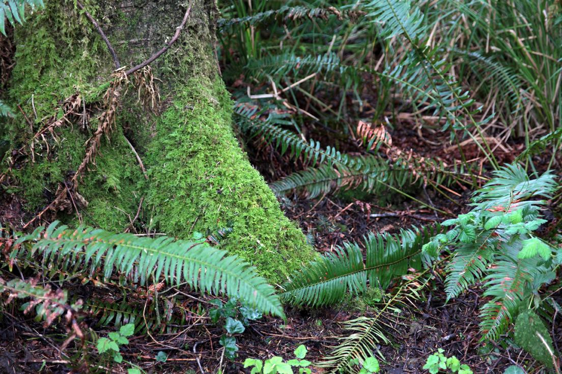 Base of tree with moss, ferns and various other greenery.